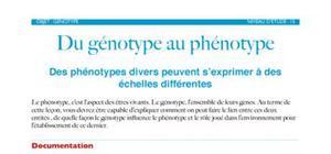 Du génotype au phénotype