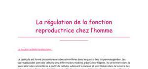La régulation de la fonction reproductrice chez l'homme (Tle S)