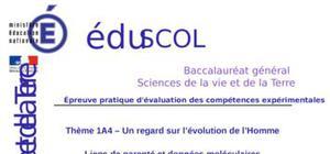 Liens de parenté et données moléculaires : Sujet 0 S (SVT)
