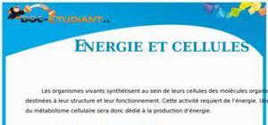 Energie et Cellule vivante : Cours Terminale S