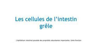 Les cellules de l'intestin grêle - Médecine PACES