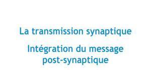 La transmission synaptique : intégration du message post-synaptique - Biologie PACES