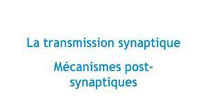 La transmission synaptique : mécanismes post-synaptiques - Biologie PACES