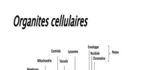 Biologie cellulaire microscopie schémas