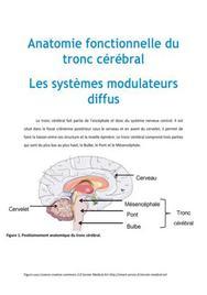 Anatomie fonctionnelle du tronc cérébral : Les systèmes modulateurs diffus