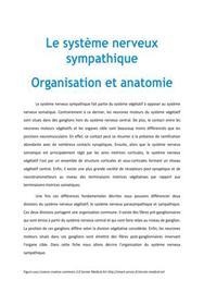 Le système nerveux sympathique : Organisation et anatomie