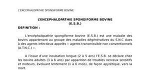L'encephalopathie spongiforme bovine