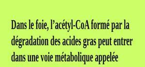 Métabolisme et catabolisme du cholestérol