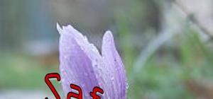 Internationalisation d'un produit du terroir: cas du safran produit par une coopérative