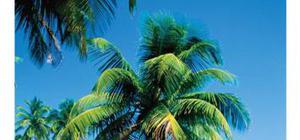 Guide de bonnes pratiques pour une bonne gestion des questions environnementales et sociales dans le secteur de l'hÉbergement touristique