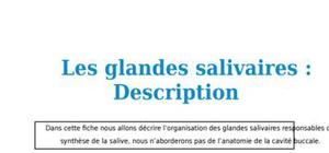 Les glandes salivaires : description