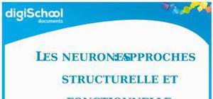 Fiche de révision Bac biologie : Les neurones approches  fonctionnelle et structurelle