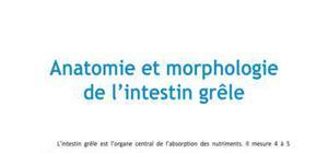 Doc - Anatomie et mrophologie de l'intestin grele PACES