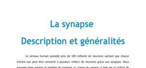 La synapse : Description et généralités - Neuro PACES