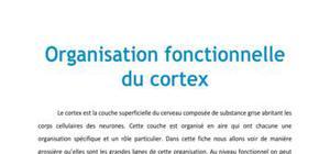 Organisation fonctionnelle du cortex - Médecine PACES