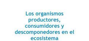Los organismos productores, consumidores y descomponedores en el ecosistema - Ciencias naturales