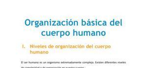 Organización básica del cuerpo humano - Biología - 1 de bachillerato
