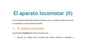 El aparato locomotor II - Biología - 1 de bachillerato