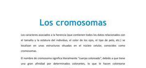Los cromosomas - Biología - 4 ESO