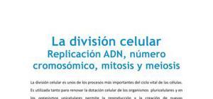 Replicación ADN, número cromosómico, mitosis y meiosis - Biología - 4 ESO