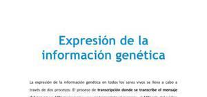 Expresión de la información genética - Biología - 4 ESO