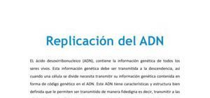Replicación del ADN - Biología - 4 ESO